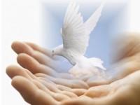 Animal-Spirituality_Humanity-Healing-2