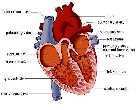National Conference of Bangladesh Cardiac Society