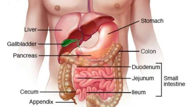 IBS: উপসর্গ, কারণ ও প্রতিকার
